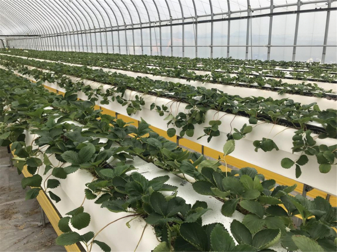 Eco-friendly fertiliser technology uses greenhouse gases to promote crop growth